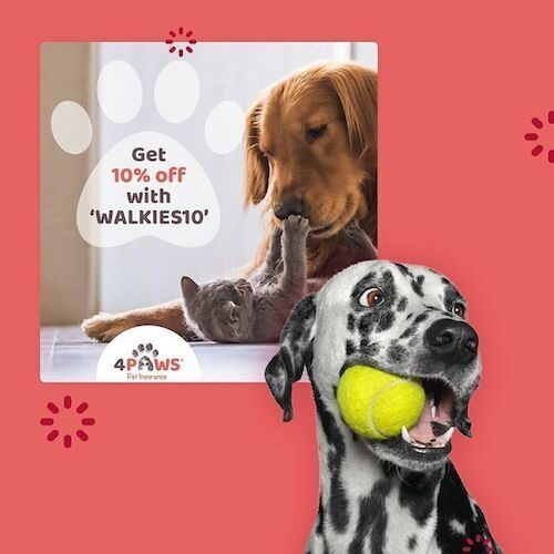 A social media advert for pet insurance company 4Paws, showing a dog holding a ball in its mouth, and another dog playing with a kitten.